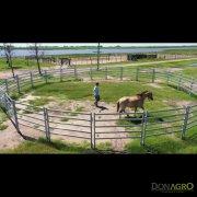 Corral Circular 10mts Lemsco para equinos 1.80 alto